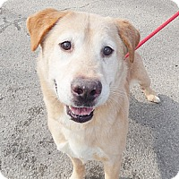 Adopt A Pet :: Boston - Lewisville, IN