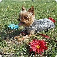 Adopt A Pet :: Smudge - Lockhart, TX