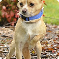 Adopt A Pet :: T-Bone - Salem, OR