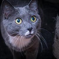 Adopt A Pet :: Amy - Philadelphia, PA