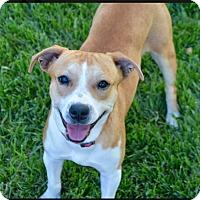 Adopt A Pet :: Laney - Charlotte, NC