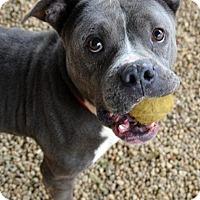 Adopt A Pet :: Arnold - Lacon, IL