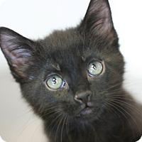 Adopt A Pet :: Cracker Jack - Canoga Park, CA