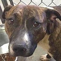 Adopt A Pet :: Finn - Springdale, AR