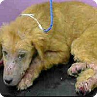 Adopt A Pet :: Logan - Boulder, CO