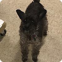 Adopt A Pet :: Lucky - Harmony, Glocester, RI