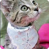 Adopt A Pet :: Purina - Gahanna, OH