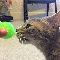 Adopt A Pet :: Chloe - Central Falls, RI