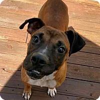 Adopt A Pet :: Buster - Raleigh, NC