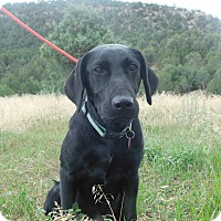 Adopt A Pet :: Dash - Ridgway, CO