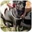 Photo 1 - Chihuahua/Terrier (Unknown Type, Small) Mix Dog for adoption in Thomaston, Georgia - Cisco