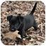 Photo 2 - Labrador Retriever Mix Puppy for adoption in Preston, Connecticut - Gemma