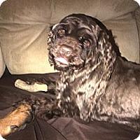 Adopt A Pet :: Mila - Ottawa, ON