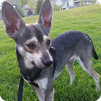 Terrier (Unknown Type, Medium) Mix Dog for adoption in Calgary, Alberta - Fritz