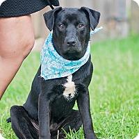 Adopt A Pet :: Finn - Kingwood, TX