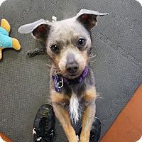 Adopt A Pet :: Smokey - Santa Rosa, CA