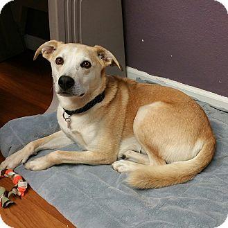 Labrador Retriever Mix Dog for adoption in Lisbon, Ohio - River