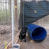 Adopt A Pet :: Chance - Marianna, FL