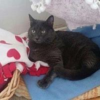 Adopt A Pet :: Ursula - Calimesa, CA