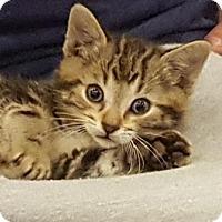 Adopt A Pet :: Swirl - Richmond Hill, ON