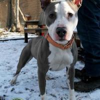 Adopt A Pet :: Lollipop - Pomona, NY