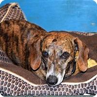 Adopt A Pet :: Olivia - York, SC