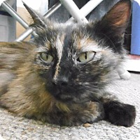 Adopt A Pet :: Tortie and Blackie - Sacramento, CA