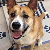 Adopt A Pet :: Frank - Phoenix, AZ