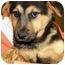 Photo 3 - German Shepherd Dog Puppy for adoption in Oswego, Illinois - I'M ADOPTED Riley Gombash