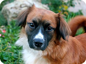 Spaniel (Unknown Type) Mix Dog for adoption in Los Angeles, California - Carmel
