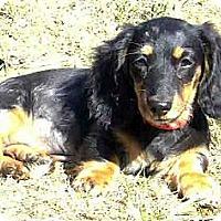 Adopt A Pet :: Mabel - San Jose, CA