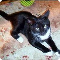 Adopt A Pet :: Goofy - Alexandria, VA