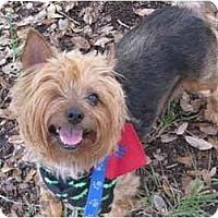 Adopt A Pet :: Kenzie - West Palm Beach, FL