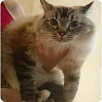 Adopt A Pet :: Poppy - Keizer, OR