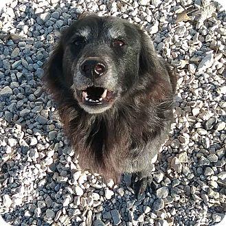 Retriever (Unknown Type) Mix Dog for adoption in Minneapolis, Minnesota - Stormy