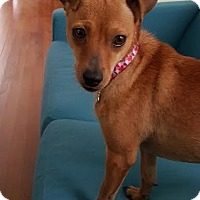 Adopt A Pet :: Hailey - San Antonio, TX