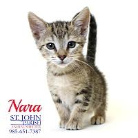 Adopt A Pet :: Nara - Laplace, LA