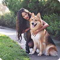 Adopt A Pet :: Leah - Irvine, CA