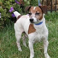 Adopt A Pet :: Rikki - Orland Park, IL