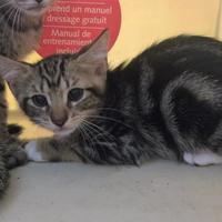 Adopt A Pet :: CAESAR - St. Thomas, VI
