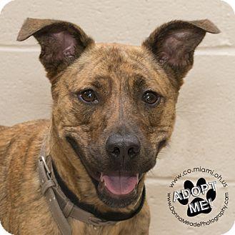 Mixed Breed (Medium) Mix Dog for adoption in Troy, Ohio - Spring