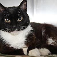 Adopt A Pet :: Tuxx (Neutered) - Marietta, OH