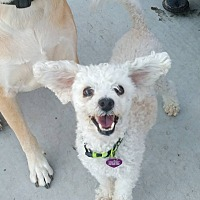 Adopt A Pet :: Geoffrey 2 - Las Vegas, NV