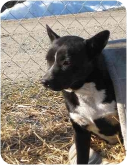 Labrador Retriever/American Pit Bull Terrier Mix Dog for adoption in Florence, Indiana - Nita