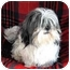 Photo 2 - Lhasa Apso Dog for adoption in Los Angeles, California - JASPAR
