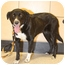 Photo 4 - Border Collie/Labrador Retriever Mix Dog for adoption in San Pedro, California - DAIZY
