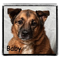 Adopt A Pet :: Baby - Warren, PA