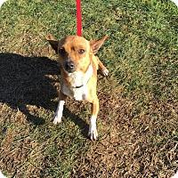 Adopt A Pet :: Jackson - Surrey, BC