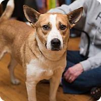 Adopt A Pet :: Ridge - Minneapolis, MN