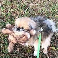 Adopt A Pet :: Palmer - Ft. Lauderdale, FL